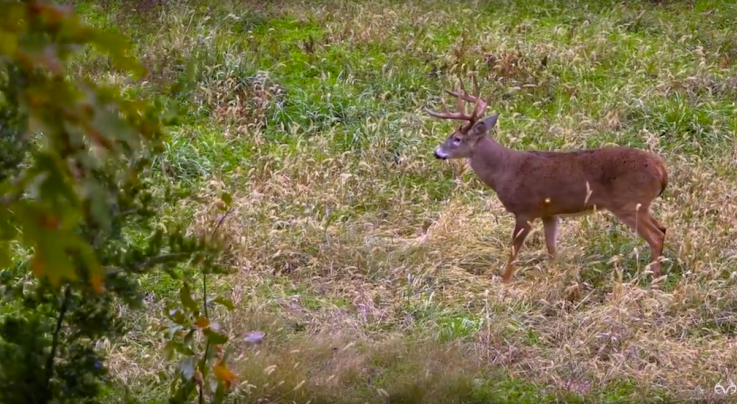 Giant 10-Point Buck Chases Doe Right to the Stand Preview Image