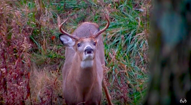 Video: Bowhunting the Whitetail Rut Preview Image