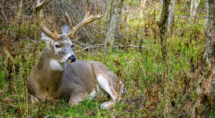 7 Things to Know About Buck Home Ranges Preview Image