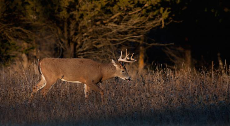 7 Reasons Most Bucks Don't Die During the Rut Preview Image