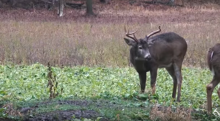 Chasing November: Wisconsin Farm Legend, Post Rut Action Preview Image