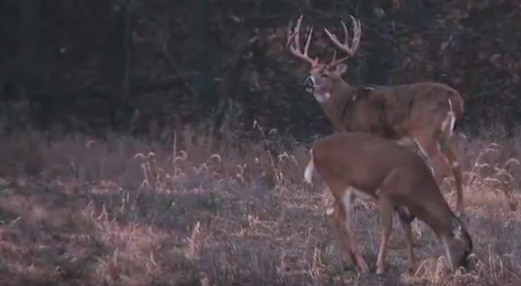 Chasing November: Doubling Up on Big Whitetails Preview Image
