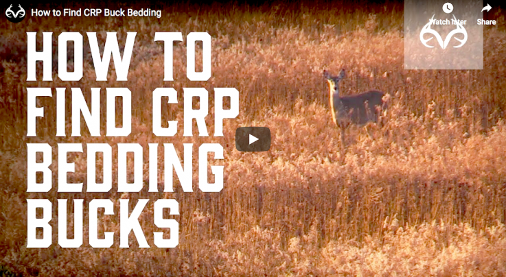 How to Find CRP Buck Bedding Preview Image