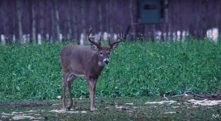 The Chronicles: Bowhunting Giant Big-Bodied Bucks in Alberta Preview Image