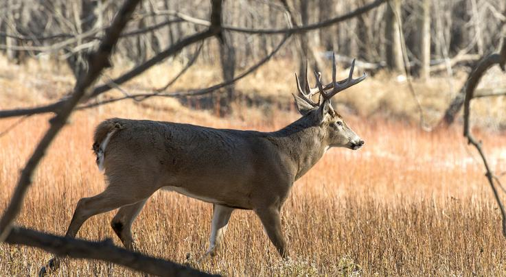 10 Ways to Create Better Bedding Cover for Deer Preview Image