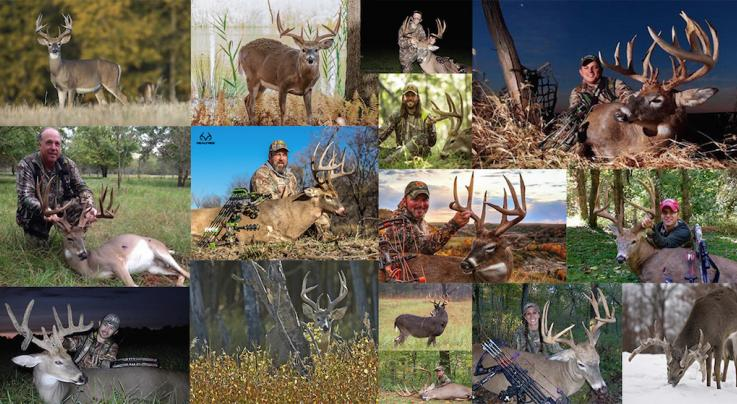 15 Best States for DIY Deer Hunting in 2018 Preview Image