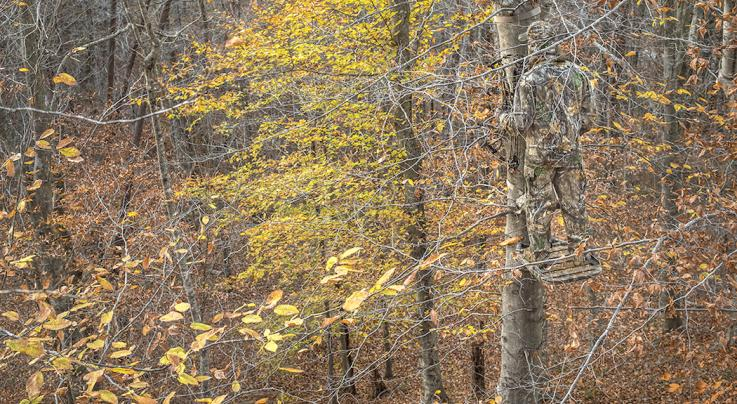 The Best Conditions for Deer Hunting Preview Image