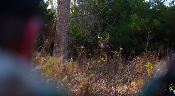 The Craziest Whitetail Rut Action You've Ever Seen Preview Image