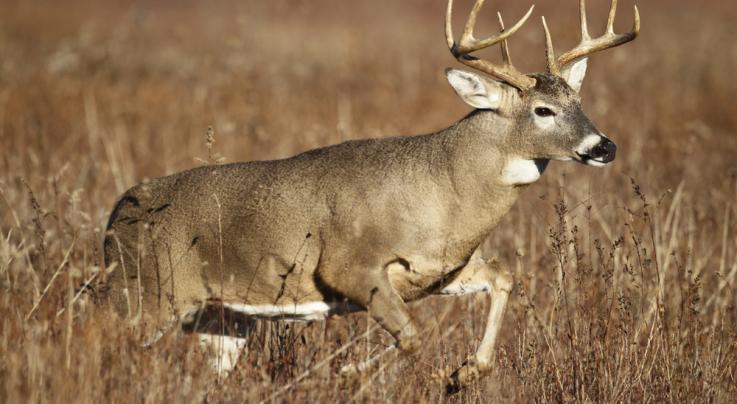 10 Tips for Deer Hunting in Big CRP Fields Preview Image