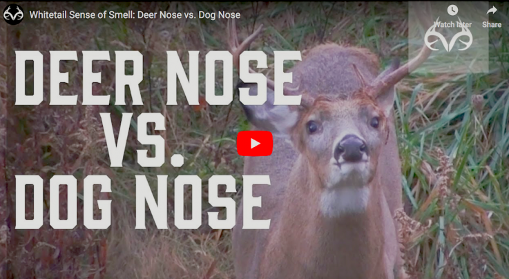 Whitetail Sense of Smell: Deer Nose vs. Dog Nose Preview Image
