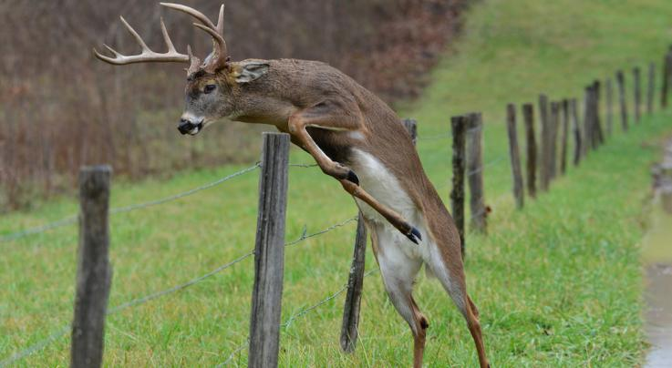 15 Big Deer Hunting Secrets Exposed Preview Image