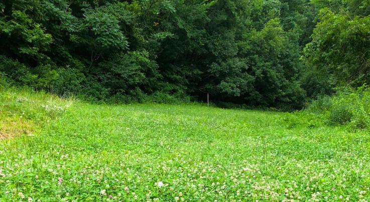 What to Plant in a Half-Acre Food Plot Preview Image