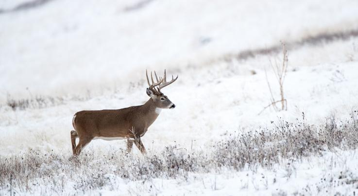 Record Deer: The Correlation of Pope and Young Harvest Maps and Hilly Terrain Preview Image