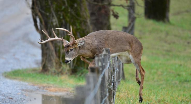 State Enacts Emergency Rules to Protect Deer and Prevent Spread Of CWD Preview Image