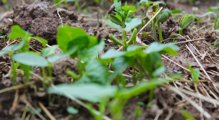 How to Plant a Micro Kill Plot for Deer Preview Image