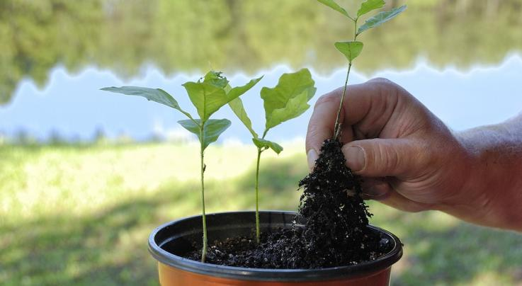 12 Tips for Planting Oak Trees from Those You Already Hunt Over Preview Image