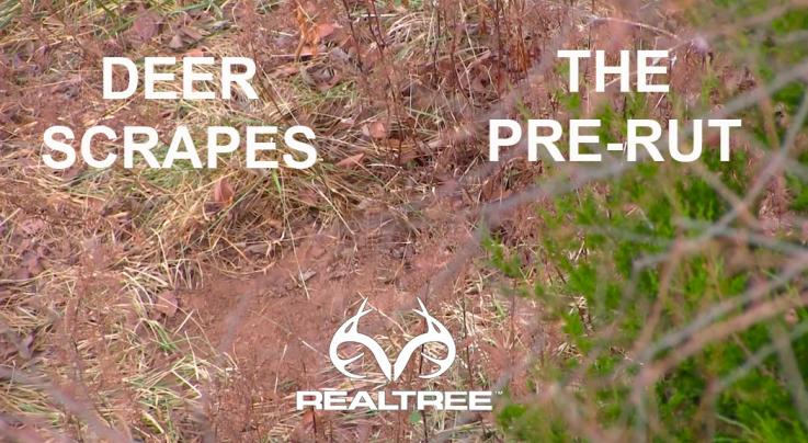 7 Things to Know About Deer Scrapes Preview Image