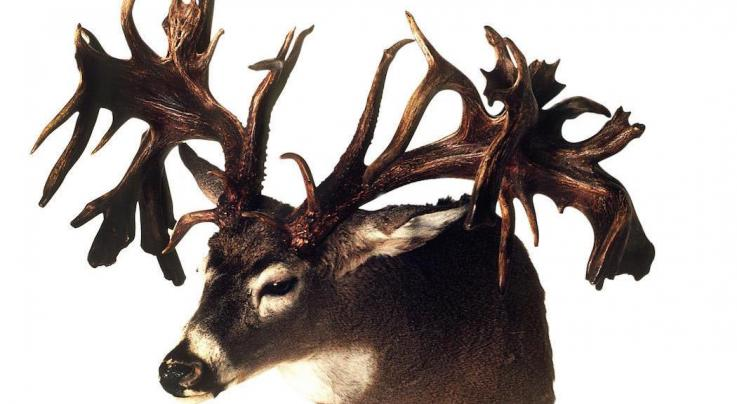 Record Deer: Top 5 Non-Typical Bucks from the Midwest Preview Image