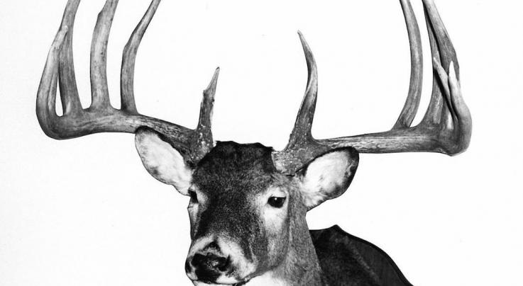 Record Deer: Top 5 Typical Bucks from the Midwest Preview Image
