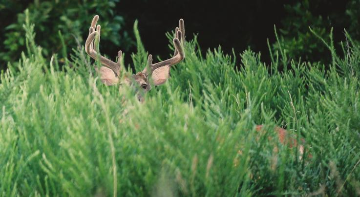 7 Best States to Kill a Velvet Buck This Season Preview Image