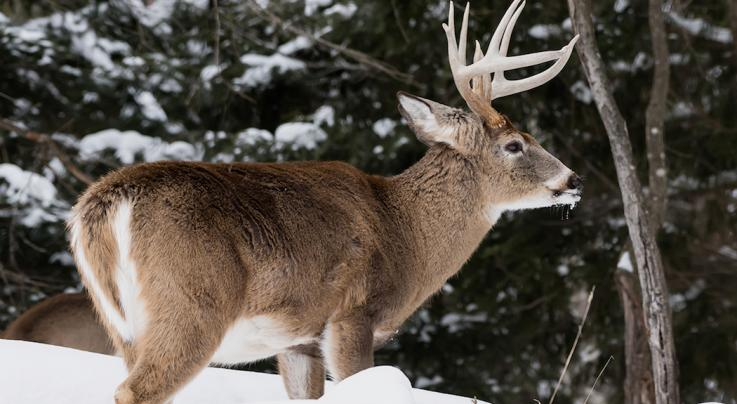 The Cheapest States for Non-Resident Deer Hunting This Season Preview Image