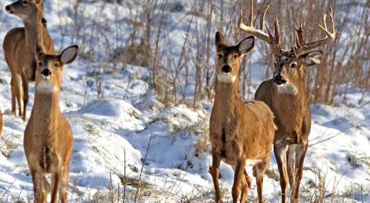5 Conservation Organizations That Help Deer Hunting Preview Image