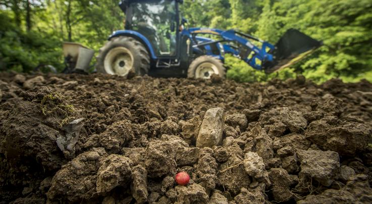 How to Plant a Food Plot Preview Image