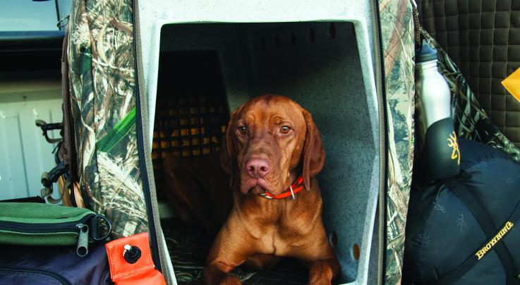 5 Tips to Keep Your Hunting Dog Happy Preview Image