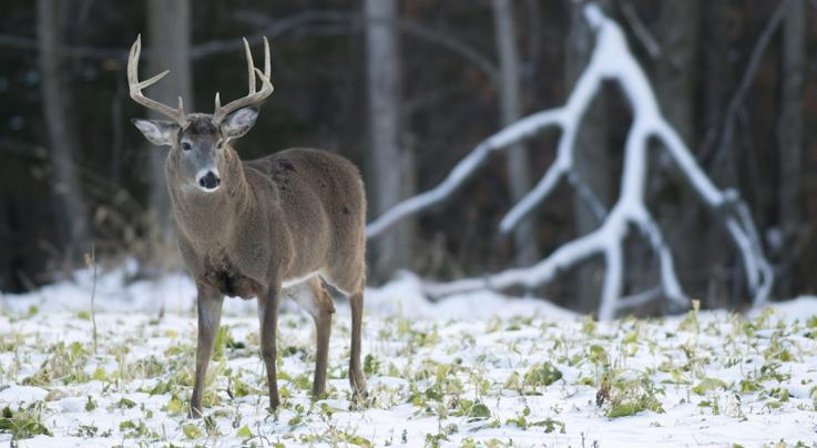 Quiz: How Well Do You Know Late-Season Deer Hunting? Preview Image