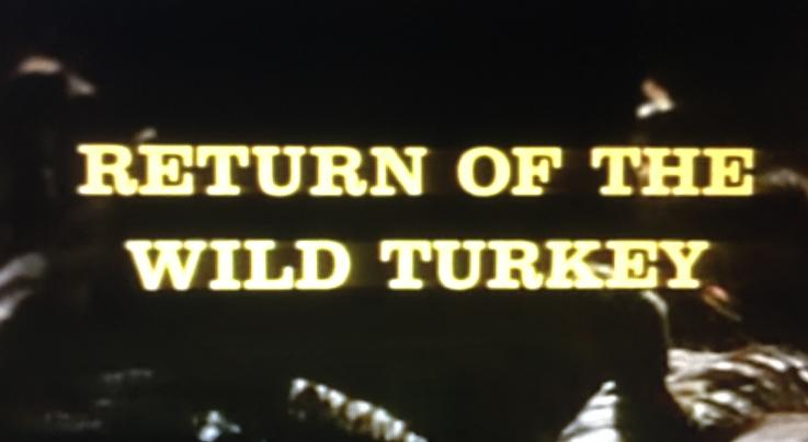 Cool Old-School Documentary on the Wild Turkey Success Story Preview Image