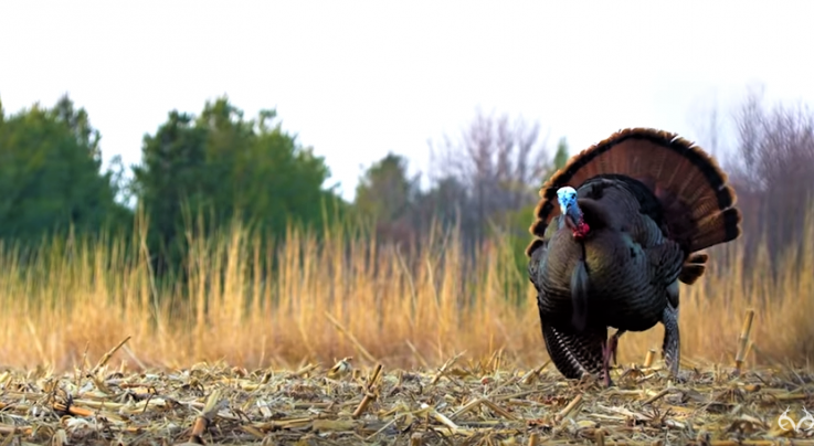 Realtree's Spring Thunder: Season Finale Preview Image