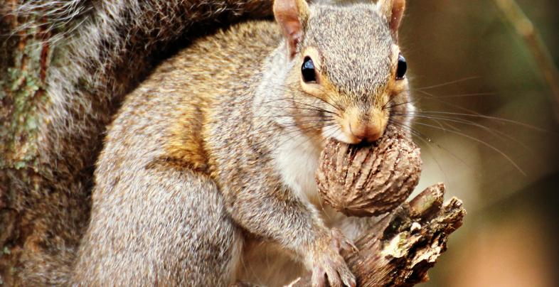 5 Reasons Squirrel Hunting Is So Popular Preview Image