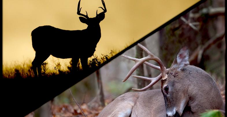 The Difference Between a Buck's Core Area and Home Range Preview Image