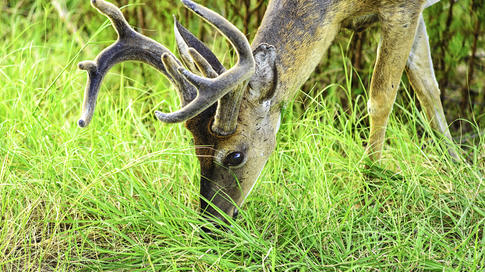 How to Pattern a Buck During the Pre-Season Preview Image
