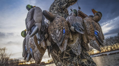 6 Great Places for DIY Duck Hunting Preview Image