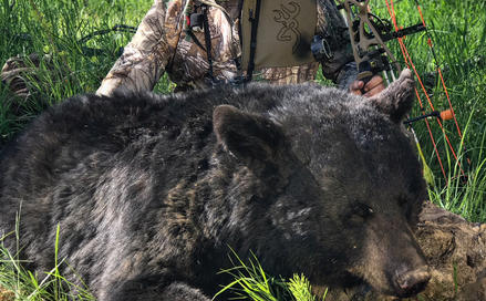 3 Tactics for Hunting Monster Black Bears Preview Image