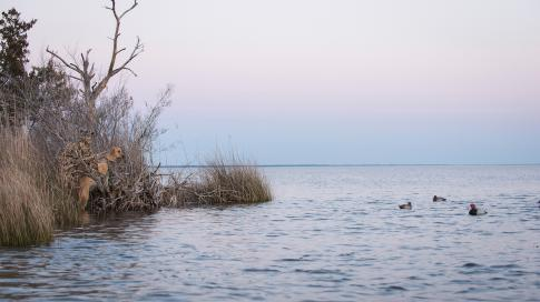 Mississippi Flyway on the Brink of Big Changes Preview Image