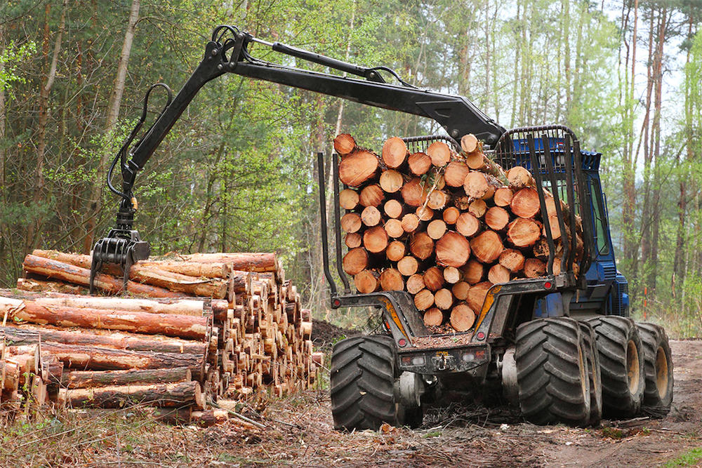 Harvest Your Timber