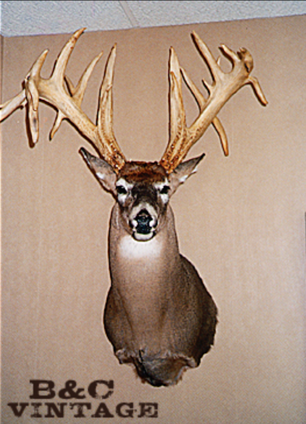 Whitetail with the Widest Outside Spread