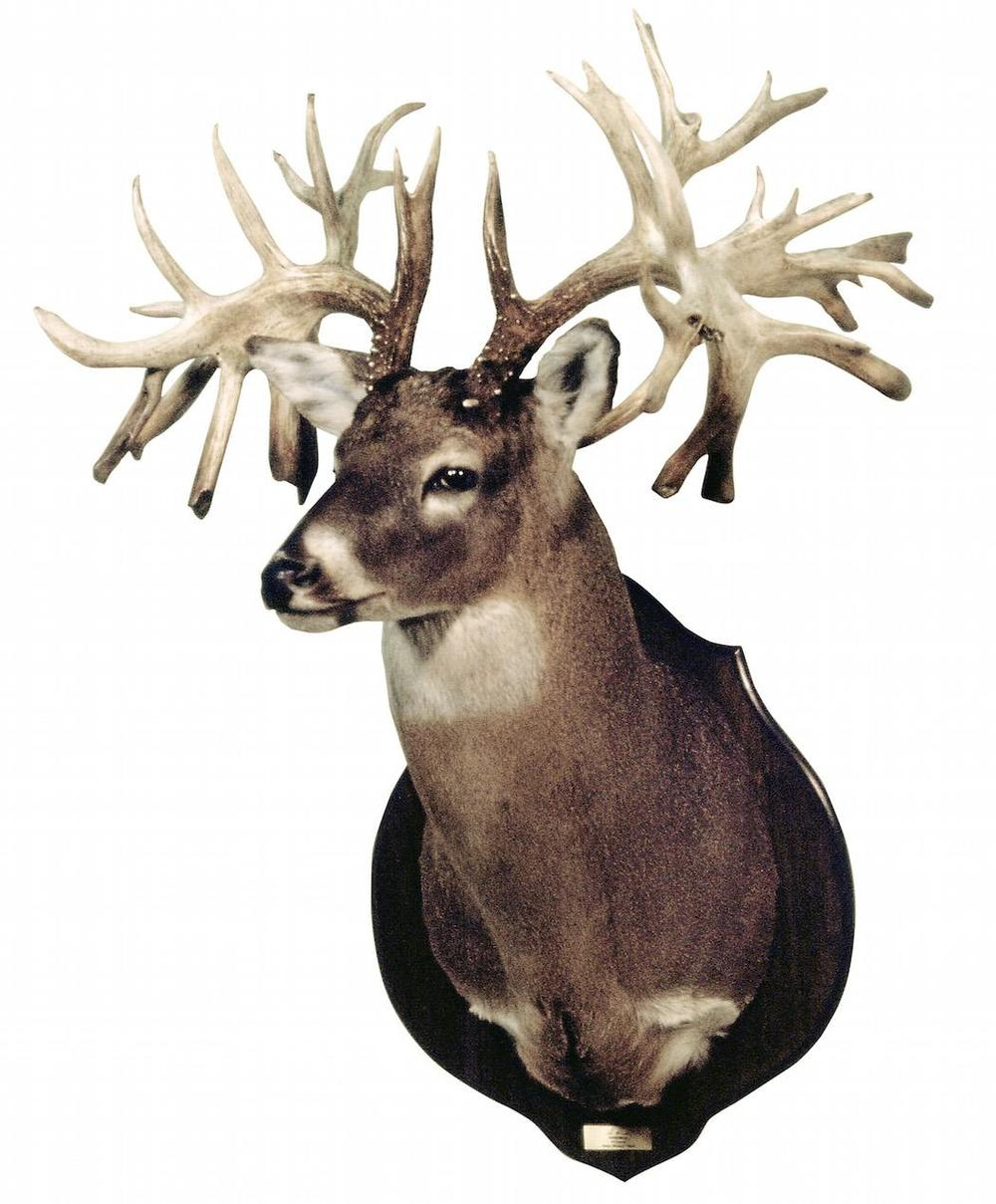 Largest Non-Typical Whitetail