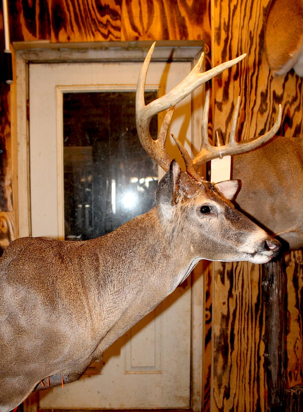 Deer Head Mount >> Whitetail Taxidermy Poses for Your Next Deer Mount   Realtree