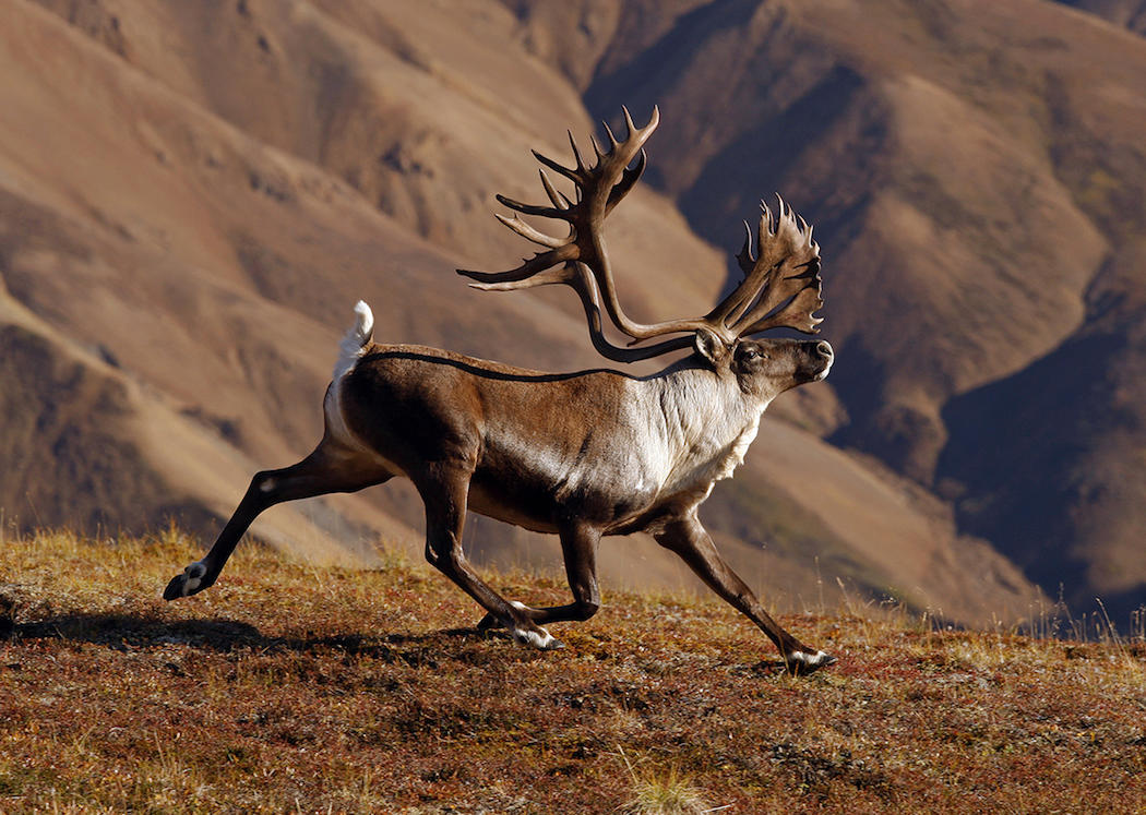 North American Super Slam: 29 Big Game Animals You Need ...