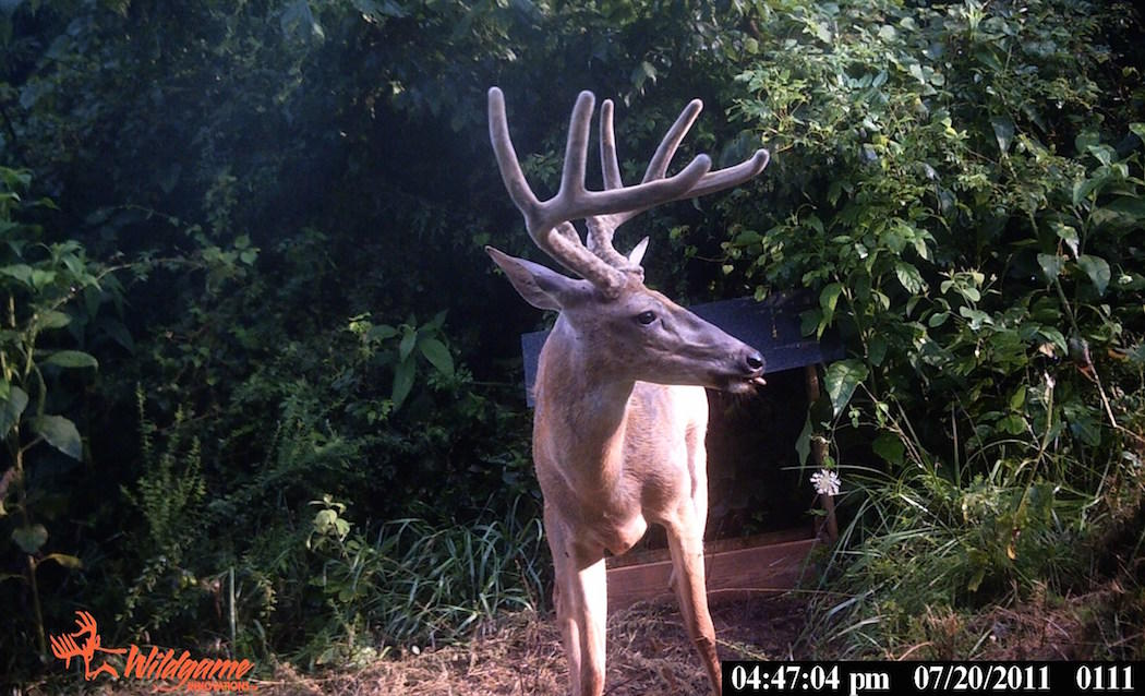 Improper Scouting and Overusing Trail Cameras