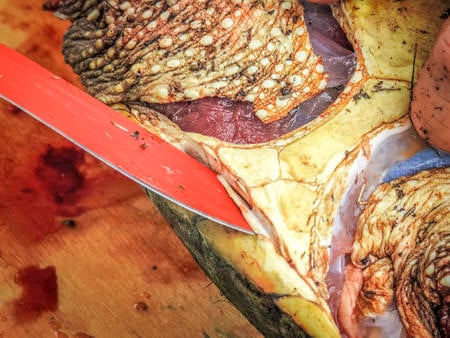 Separate the plastron from the carapace of the shell with a heavy bladed knife.