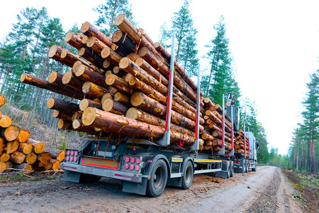 Has the timber been harvested recently?