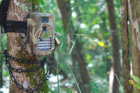 Bonus Tip: Use Video Mode on Trail Cameras