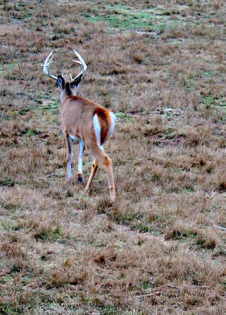 OVERHUNTING WILL KILL YOUR CHANCES. LITERALLY.