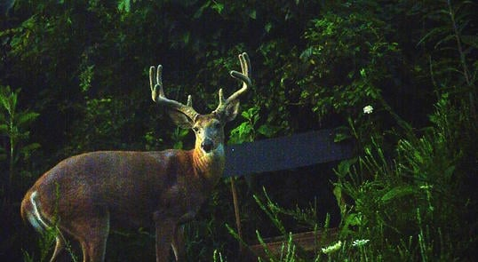 The Double-Take Safety Deer