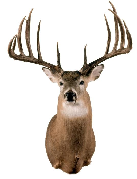 Largest Typical Whitetail