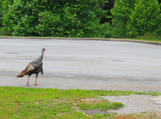 Hunt Close to the Parking Lot